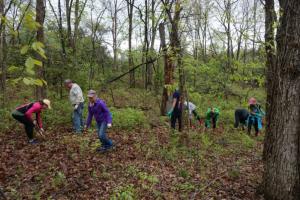 MAB trail clearing 1