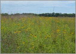 sunflower land trust